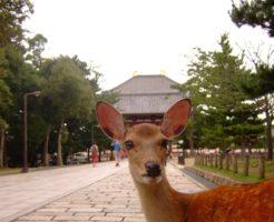 【妊活神社】奈良県の妊活神社・子宝神社を大公開
