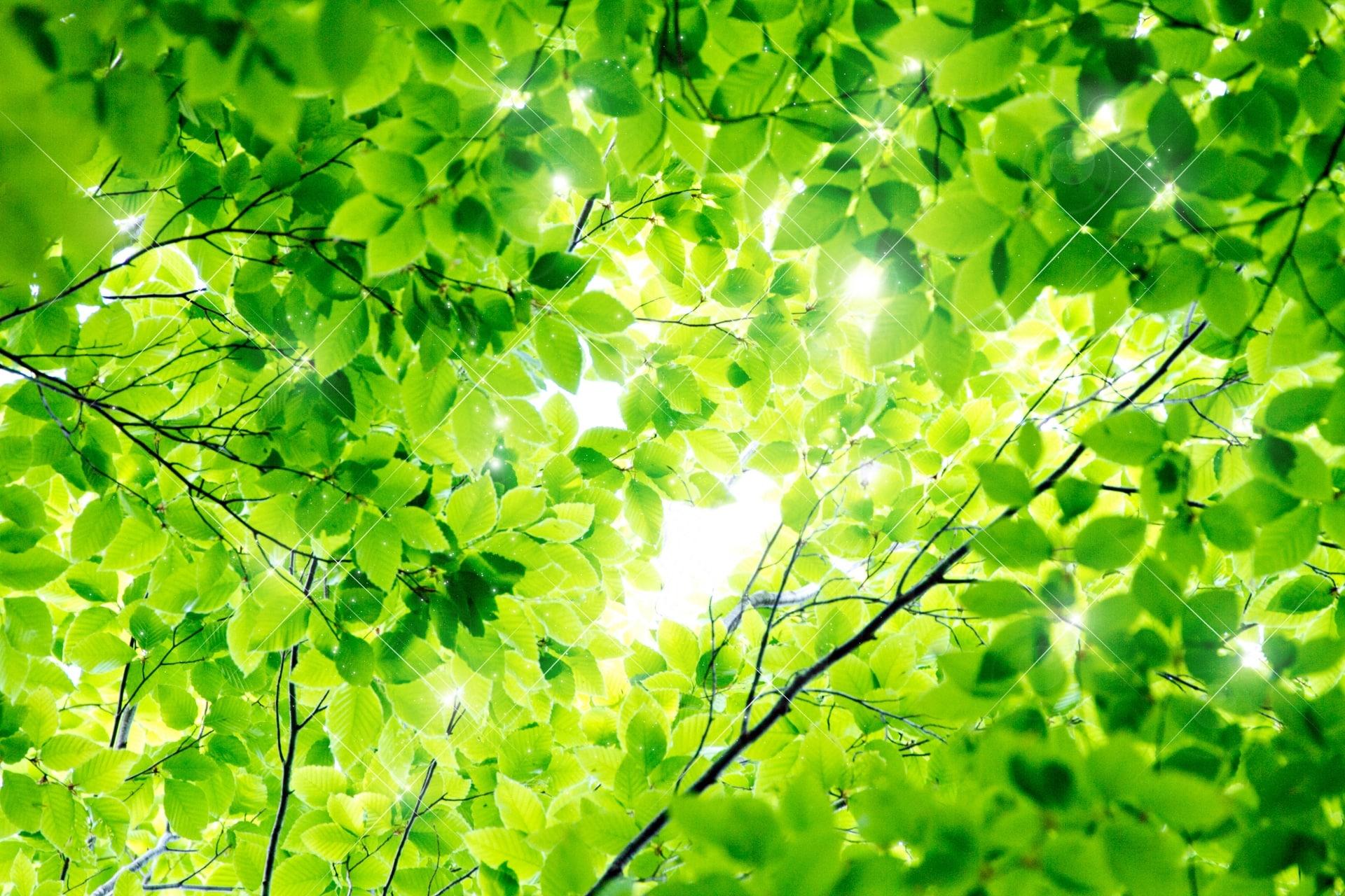 【色の効果】緑色があなたに与える効果・パワー