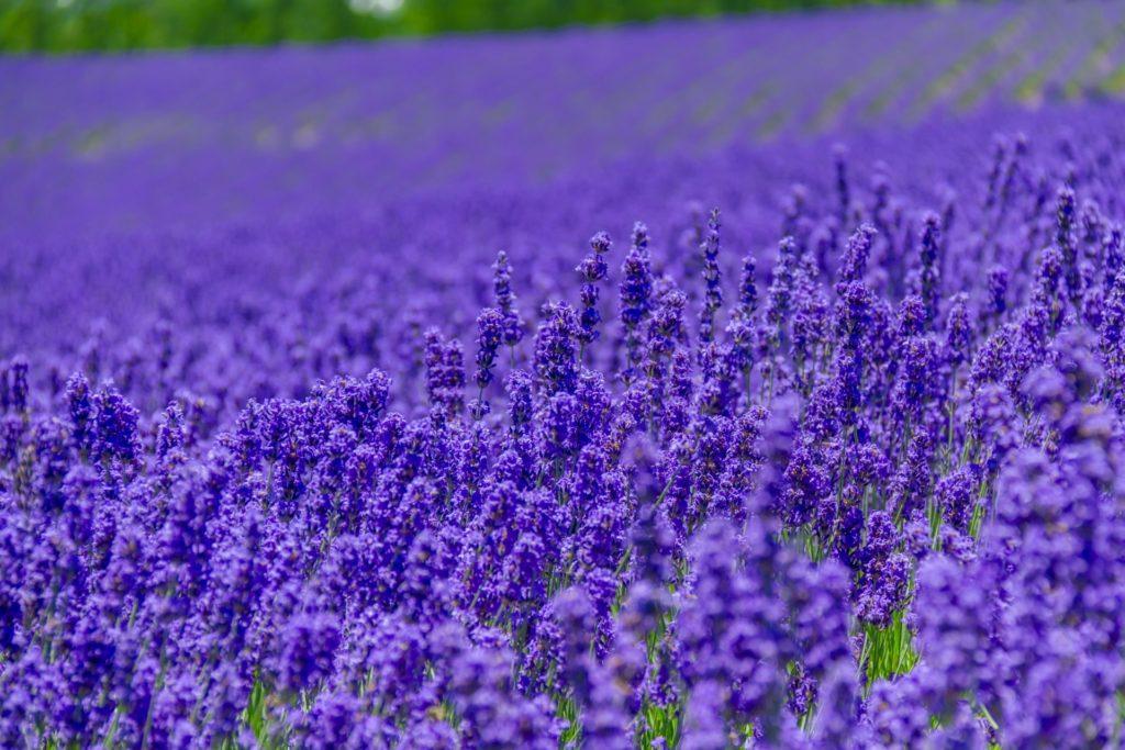 【色の効果】紫があなたに与える効果・パワー