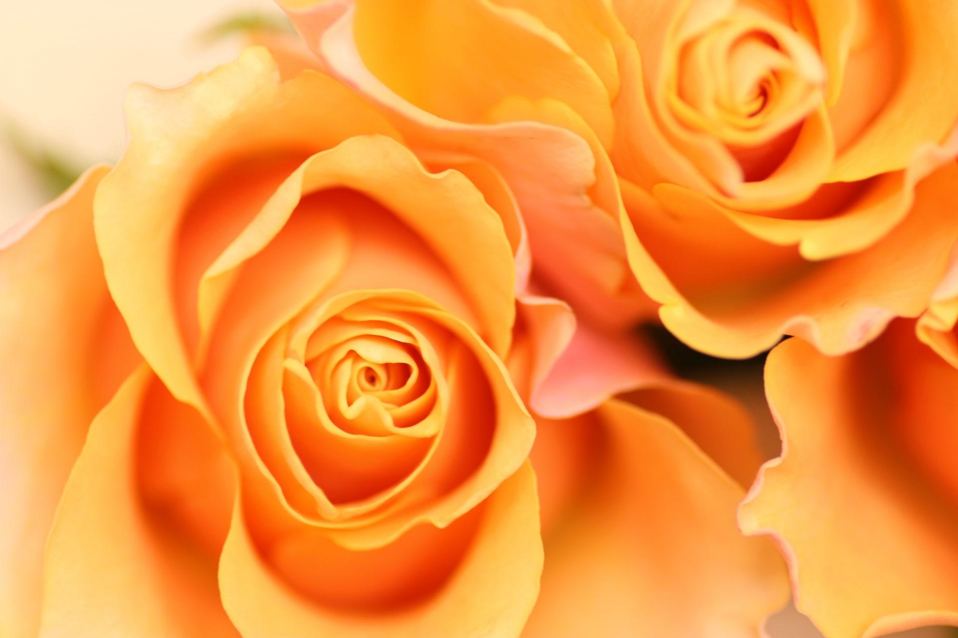 【色の効果】橙色があなたに与える効果・パワー