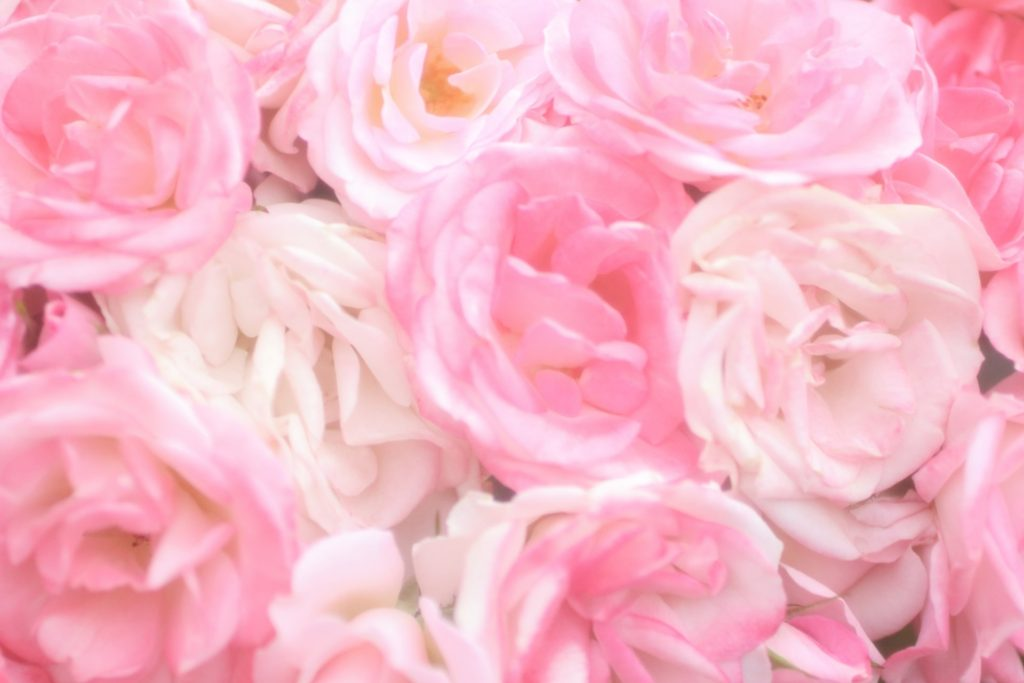 【色の効果】ピンクがあなたに与える効果・パワー
